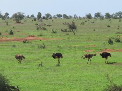 savann dating scen